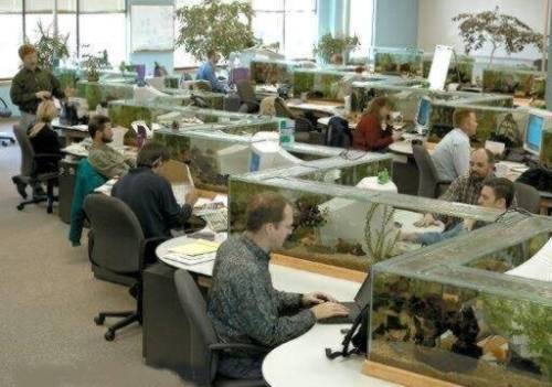 office-fish.jpg
